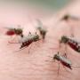 【生活】你用什么牌子的驱蚊产品?
