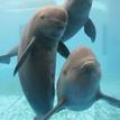 【环保】你愿意为保护江豚做些什么?