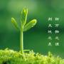 【生活】你在蚂蚁森林种了几棵树呢?