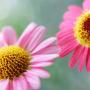 【生活】你喜欢什么花?
