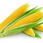 【生活】你喜欢怎么吃玉米?