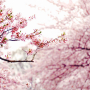 【生活】3月赏花季发放10,000个10元红包! 回答3月奖励问卷,完成更多r 问卷,有机会得到阳光普照好机会!不要错过这次的红包!