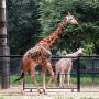 【生活】 你最喜欢去动物园看什么动物?