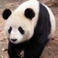 【娱乐】你选择看《功夫熊猫》的原因是?