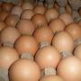 【生活】你喜欢怎么吃鸡蛋?