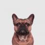 【生活】养宠物哪方面是你最担心的?
